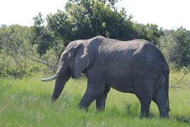 Eat the elephant.