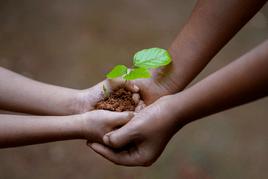Cultivate peace, wealth, abundance.